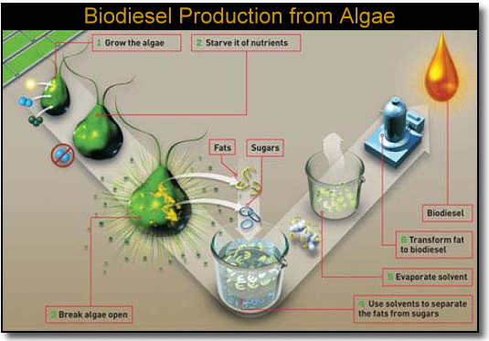 biodiesel fuel for the future essay Biodiesel as an alternative fuel essay to our biodiesel fuel needs biodiesel transportation and and environmental advantages for the future.